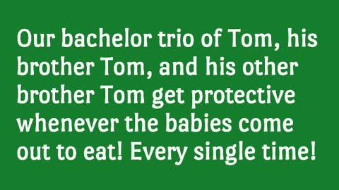 Toms & Babies (short)