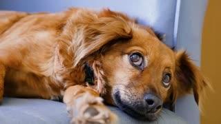 cutest dog eyes ever!! irresistible!!!