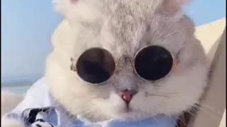 adorable and stylish cat on the beach