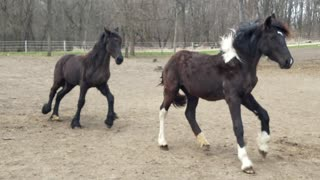 Beautiful foals play an adorable game of tag