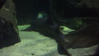 Sealife Centre Experience
