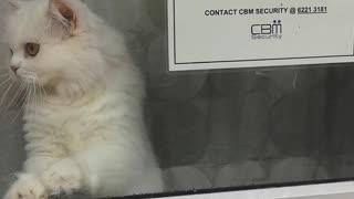 Kitty Provides Twenty-Four Hour Watch