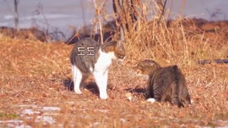 Real Cats Fighting Deadly, New Cats Fights