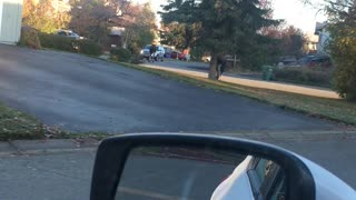 Moose Slips while Running Through Neighborhood