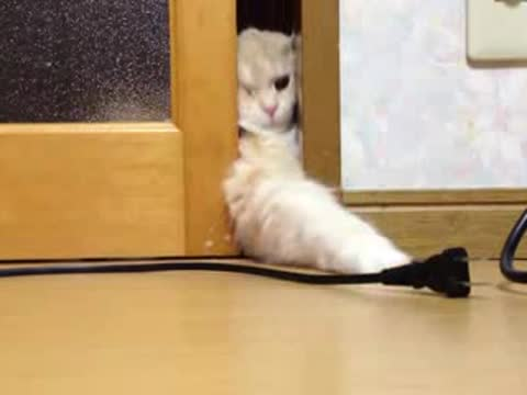 _Cat Tries to Grab Electric Cord_