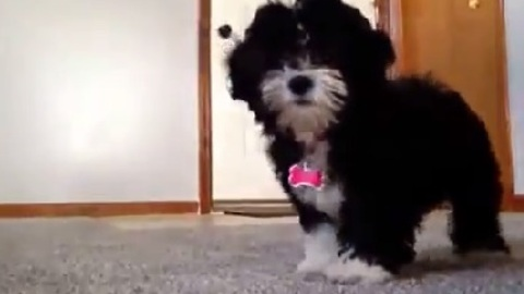 Puppy Gets Shy In Front of the Camera