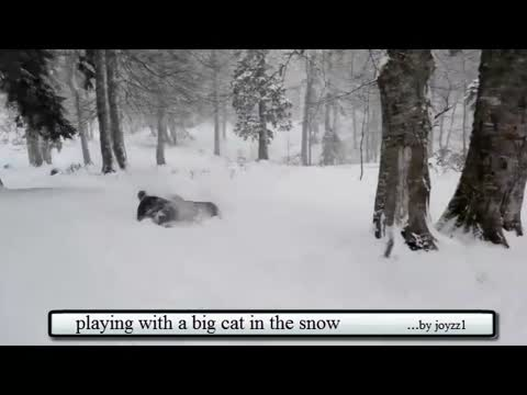 playing with a big cat in the snow