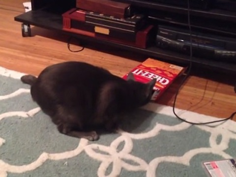 Cat Tries to Fit into a Cracker Box