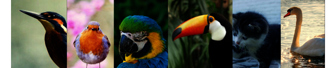 Beautiful animals and birds in the world
